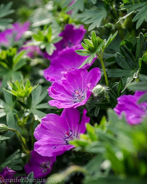 Топ-16 растений для ландшафтного дизайна
